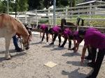 Synchronized Stretching